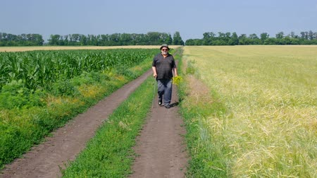 Fat senior man with bunch of wild flowers walking on a country road between maize and wheat agricultural fields at summer season