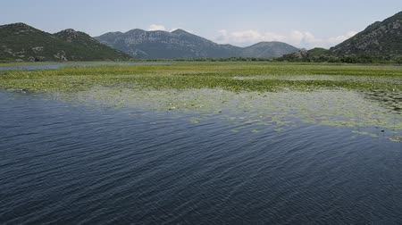 lilie : scenic summer landscape on the famous Sakadar Lake in Montenegro taken from boat