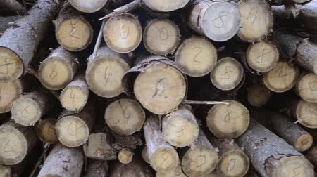 premium : many wood logs with numbers on cuts, handheld pan camera movement Stock Footage