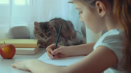 ronronar : closeup of little girl drawing a picture and stroking her pet cat Stock Footage