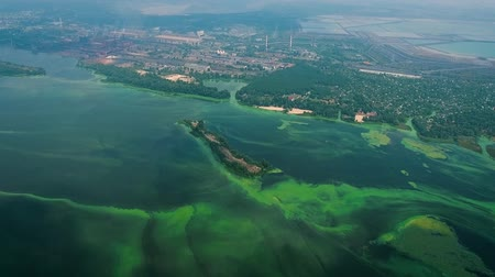 balçık : aerial of wide river polluted with green algae near industry zone Stok Video