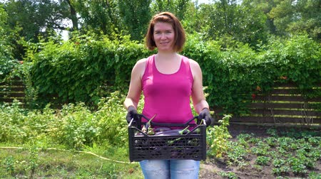 fucsia : Caucasian female farmer carrying plastic box with harvested eggplants