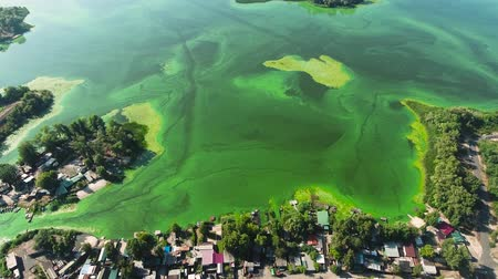 ścieki : aerial of wide river contaminated with green algae with fishing houses on bank
