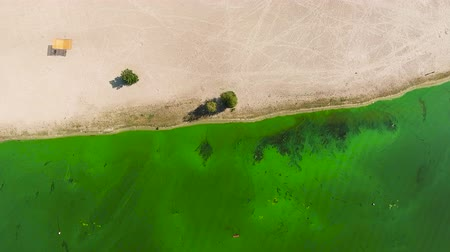 ścieki : aerial top down of water heavily polluted with green algae near sandy shore