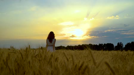 mindset : following shot of woman walking in wheat field at sunset with sky on background Stock Footage