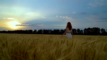 positive vibes : following shot of young woman in wheat field walking towards setting sun Stock Footage
