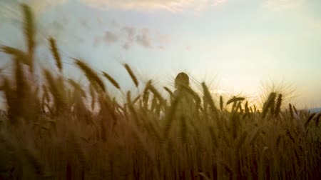 positive vibes : low angle shot of happy young woman running on wheat field at sunset