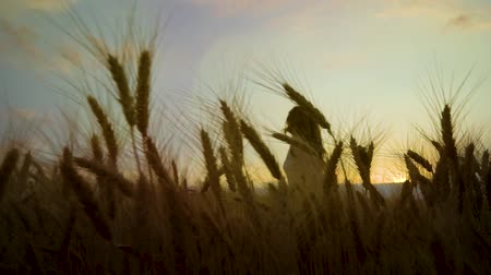 positive vibes : view of happy woman through ripe wheat ears on wheat field running at sunset