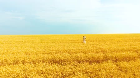 positive vibes : aerial of woman in big hat jumping and running in golden wheat field in summer