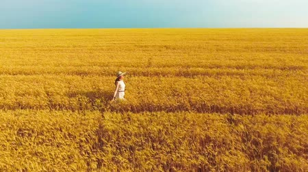 positive vibes : aerial of woman touching ripe wheat ears walking in golden wheat field in summer