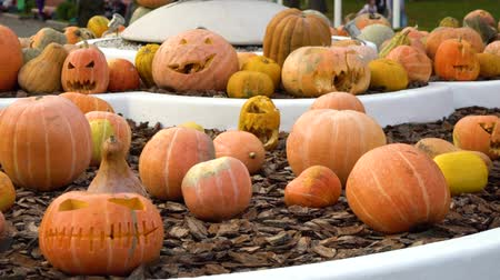 grão : halloween pumpkins with carved faces displayed as decoration in city park
