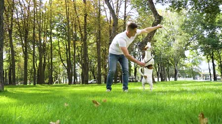 fiel : Young man playing with his cute dog in summer park Stock Footage
