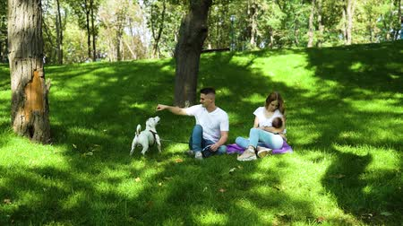 заботливый : Young parents spending time with baby and dog on green lawn