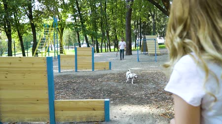 jovial : Lovely family with baby buggy and dog Jack Russell Terrier on playground