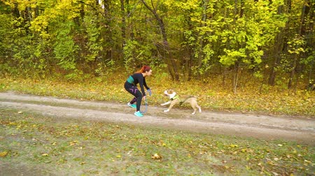 mushing : Girl with canicross belt playing with Amstaff on walkway near autumn forest Stock Footage