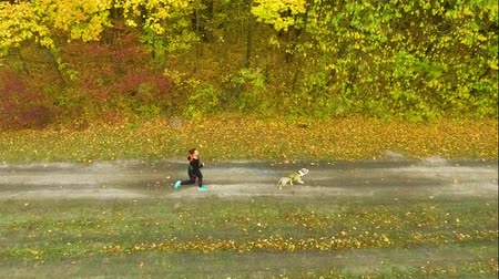 mushing : Young girl and Amstaff canicrossing on pathway near forest Stock Footage