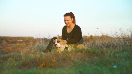 Cheerful girl petting American Staffordshire terrier in high grass at sunset