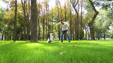 Happy owner playing with his purebred dog in summer park
