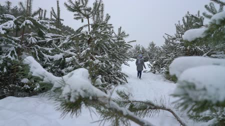 adult woman walking in pine forest on snowy day in winter Стоковые видеозаписи
