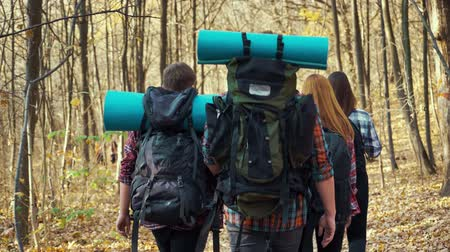 Group of young hikers walking with backpacks in autumn forest Стоковые видеозаписи