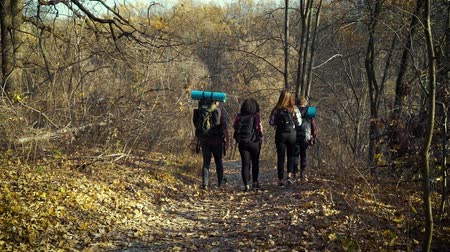 Young tourists hiking in beautiful autumn forest
