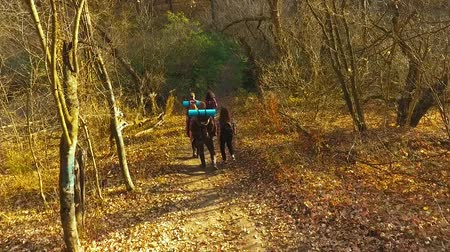 Young tourists hiking in autumn forest with backpacks Stock Footage