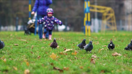 beak : Small child running towards pigeons in park on autumn day