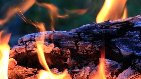 on nature : Beautiful fire flames in the nature.