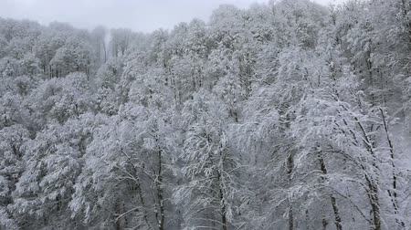ausztria : Beautiful snow covered trees in the mountains Stock mozgókép