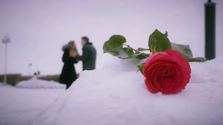 pleading : Man and woman swear on background of roses in snowdrift.