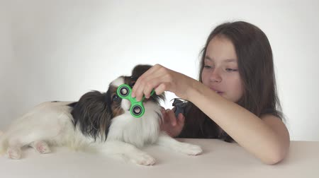 littlegirl : Dog Continental Toy Spaniel Papillon helps the girl spin the green fidget spinner on a white background stock footage video Stock Footage