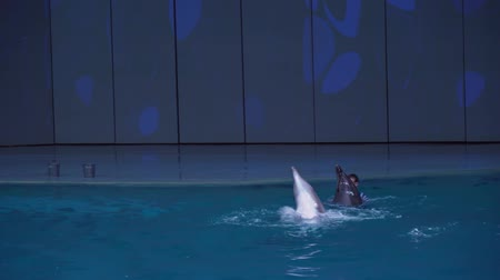 killer whale : Moscow, Russia - June 11, 2017: Show of dolphins at the Center for Oceanography and Marine Biology Moskvarium stock footage video