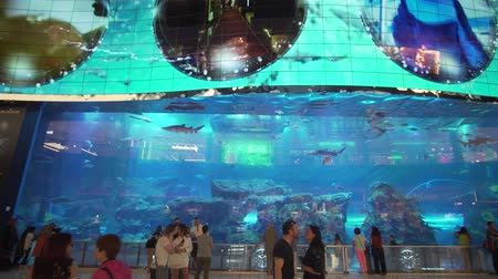 reefscape : Dubai, UAE - April 09, 2018: Dubai Aquarium and Under Water Zoo in the shopping malls interior Dubai Mall. People enjoying the beautiful view stock footage video