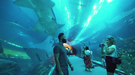 shark : Dubai, UAE - April 09, 2018: People admire the marine life in the glass tunnel of the Aquarium in Dubai Mall stock footage video
