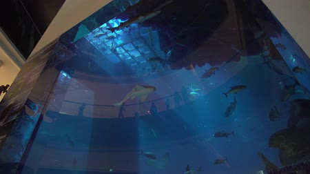 school of shark : Dubai, UAE - April 09, 2018: Dubai Aquarium and Under Water Zoo in the shopping malls interior Dubai Mall stock footage video