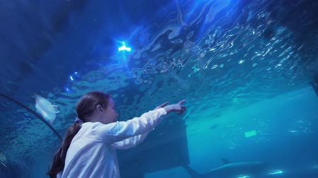 reefscape : Teenage girl with Dad watching the fish in the Aquarium stock footage video