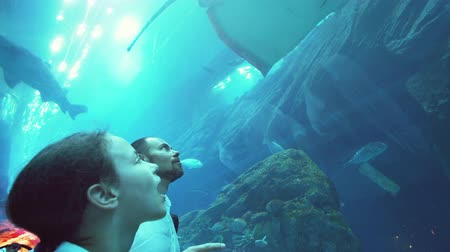 school of shark : Teenage girl with Dad watching the fish in the Aquarium stock footage video