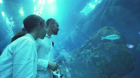 shelf life : Dubai, UAE - April 09, 2018: Teenage girl with Dad admire the marine life in the glass tunnel of the Aquarium in Dubai Mall stock footage video