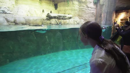 sempre viva : Girl playing with Banded penguin in an artificial open-air cage with a swimming pool stock footage video