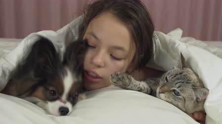 purebred cat : Happy teen girl communicates with dog Papillon and Thai cat in the bed stock footage video