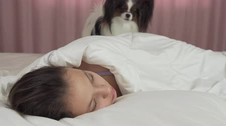 spanyel : Papillon dog wakes teen girl in bed stock footage video Stok Video