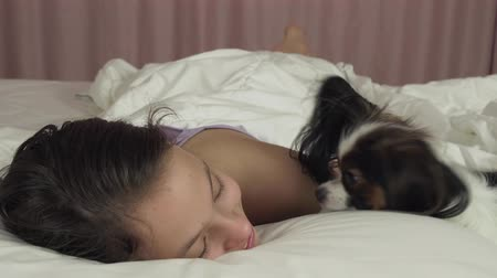 obediente : Papillon dog wakes teen girl in bed stock footage video Vídeos