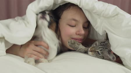 spanyel : Happy teen girl communicates with dog Papillon and Thai cat in the bed stock footage video