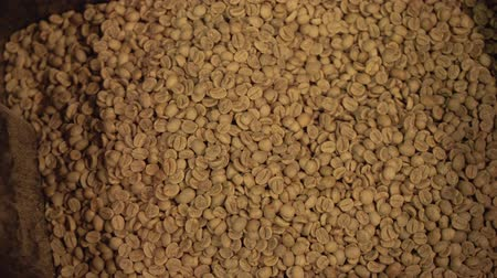 roaster : Fresh unroasted coffee beans the background stock footage video
