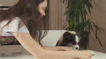 континентальный : Teen girl and dog Papillon prepare cookies, treat themselves to baked cookies stock footage video