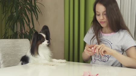 obediente : Girl teenager and dog Papillon guess on desires, dog chooses a piece of paper with a wish that will come true stock footage video Stock Footage