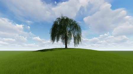compelling : Single Tree Time lapse with wind Stock Footage