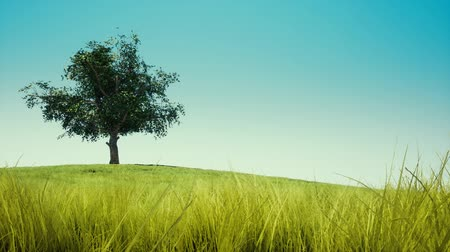 single shot : Single tree on blue sky Stock Footage