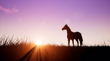 iluminado para trás : Horse at sunrise Stock Footage