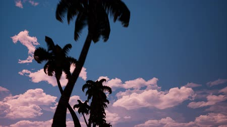 行 : Alley of palm trees